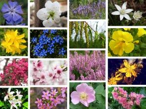 fiori_di_bach_vari