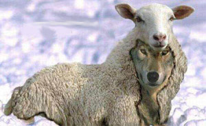 wolf-sheep-ok